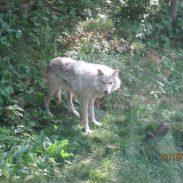El Pueblo Libre de Los Lobos